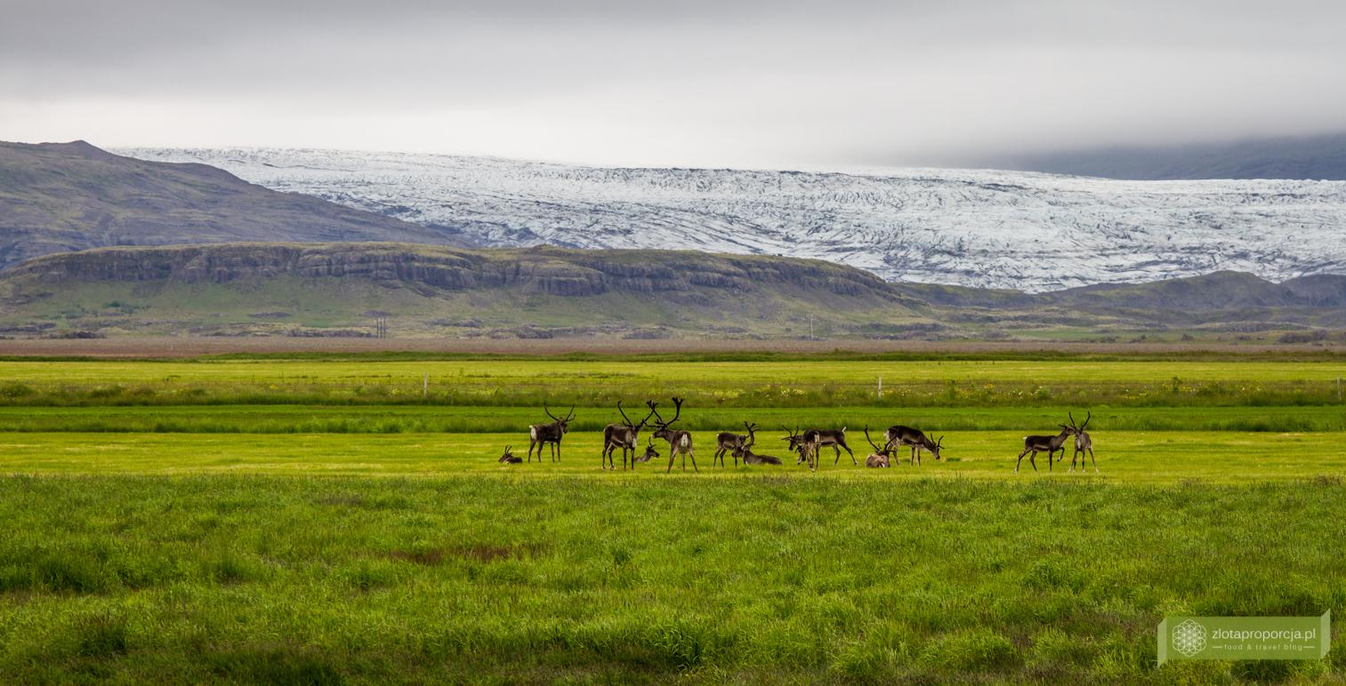 Islandia_z_drogi_0622