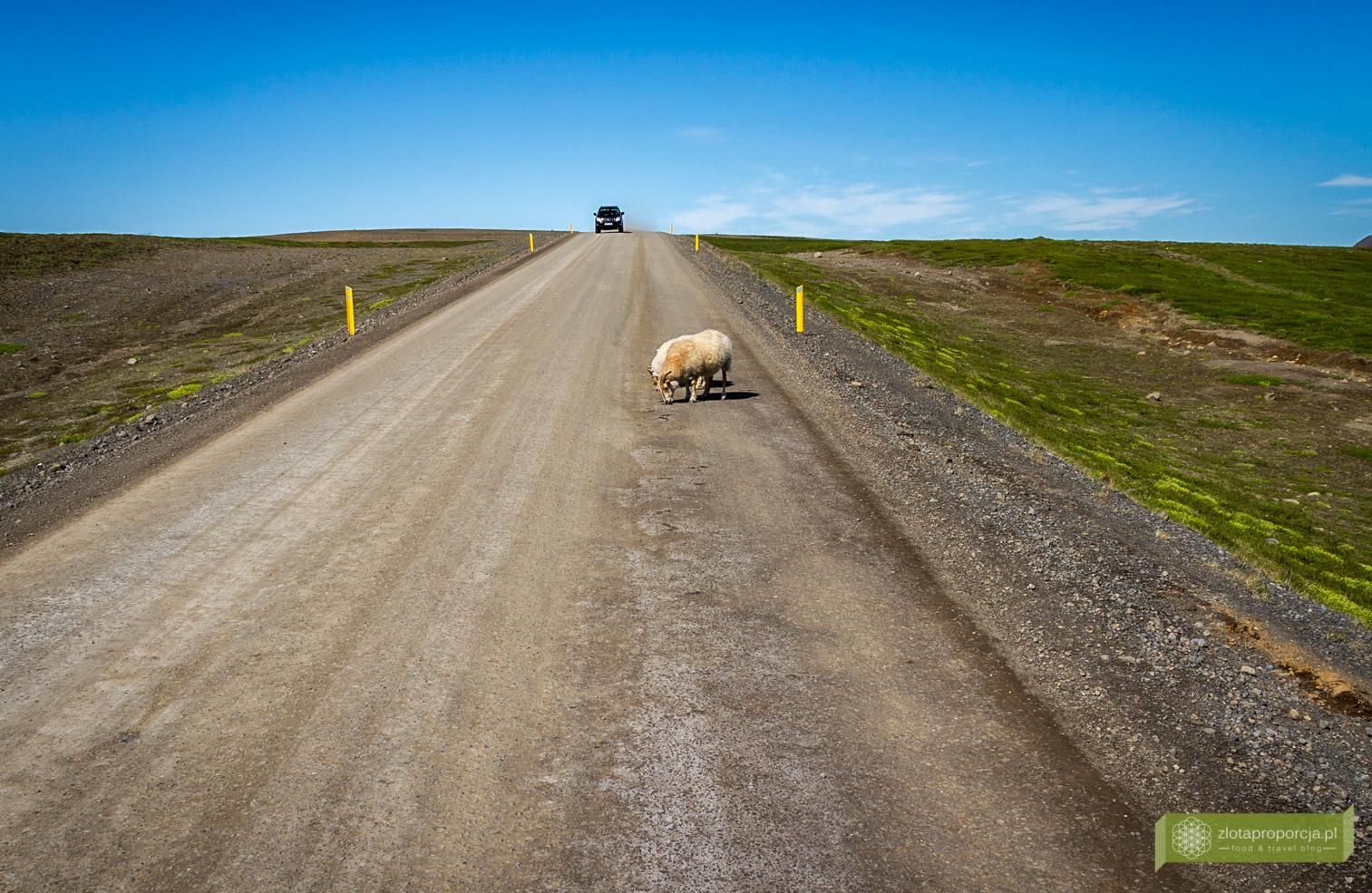 Islandia_z_drogi_0872