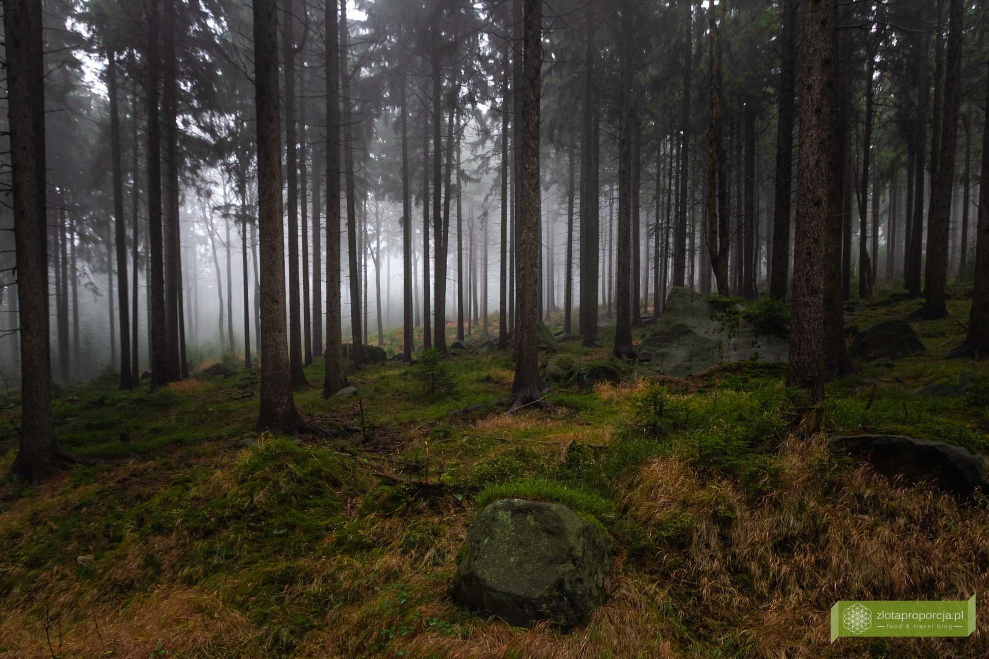 Góry Stołowe Dolny Śląsk; Góry Stołowe szlaki; Góry Stołowe atrakcje; Szczeliniec; Błędne Skały