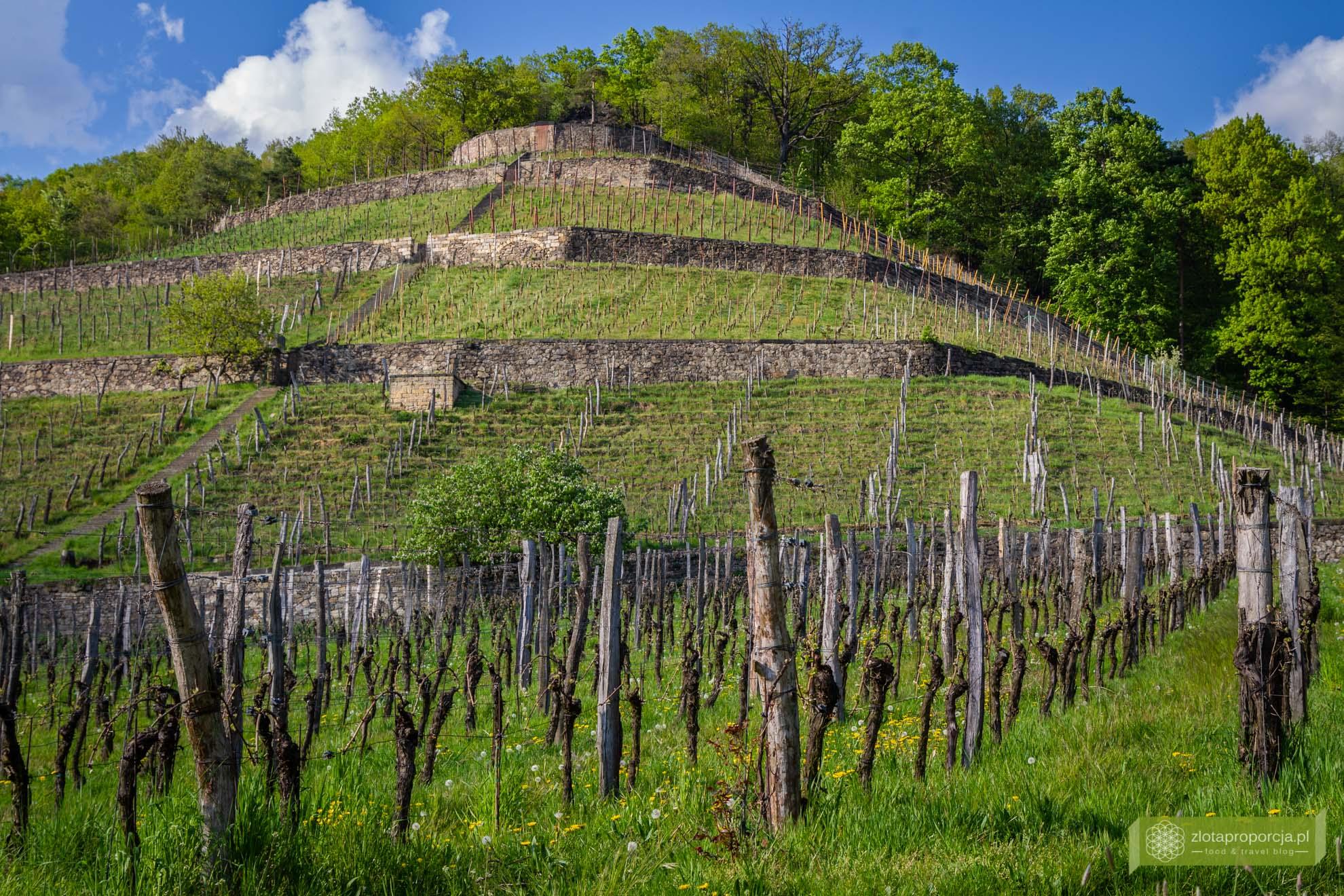 Winnica Zimmerling; Saksonia, atrakcje Saksonii, winnice Saksonii, okolice Drezna; rzeźby Małgorzaty Chodakowskiej; Saksoński Szlak Wina; Zimmerling