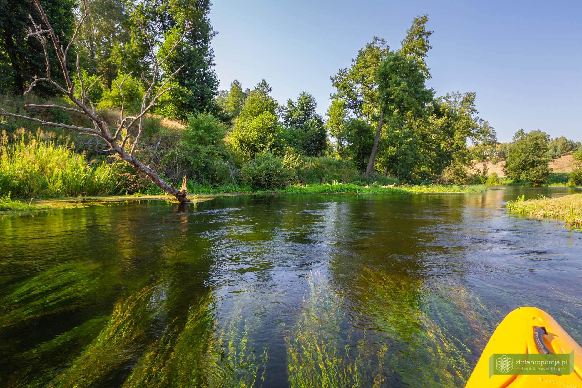 Kociewie; atrakcje Kociewia; Wda; spływ Wdą; spływ kajakowy Wdą; Bory Tucholskie