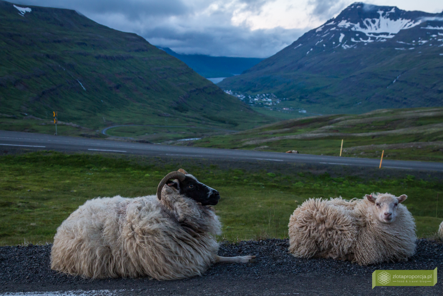 Islandia_z_drogi_0669