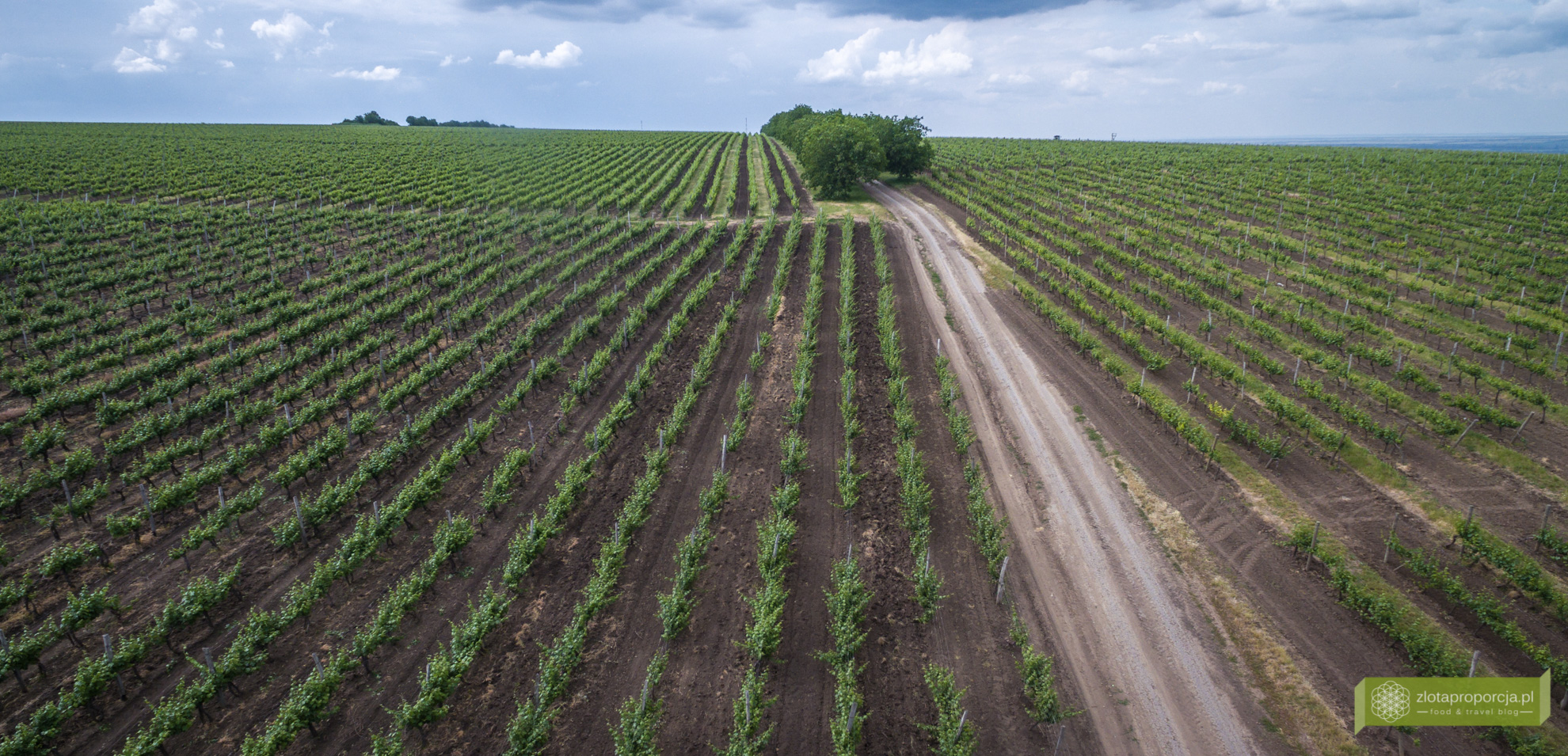 Mołdawia, wino mołdawskie, winnice Mołdawii