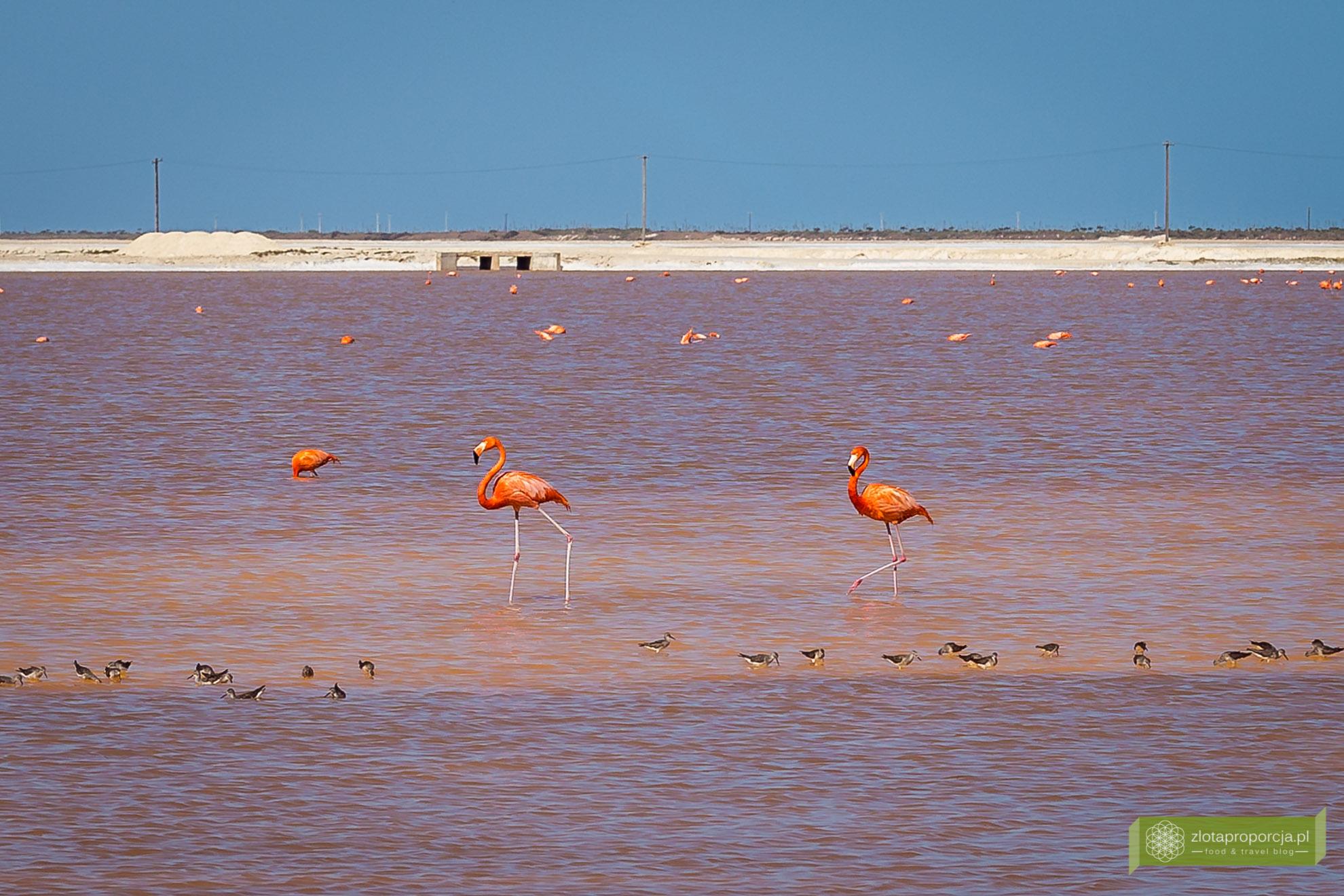 Meksyk, Jukatan, dookoła Jukatanu, atrakcje Jukatanu, Rio Lagartos, Las Coloradas