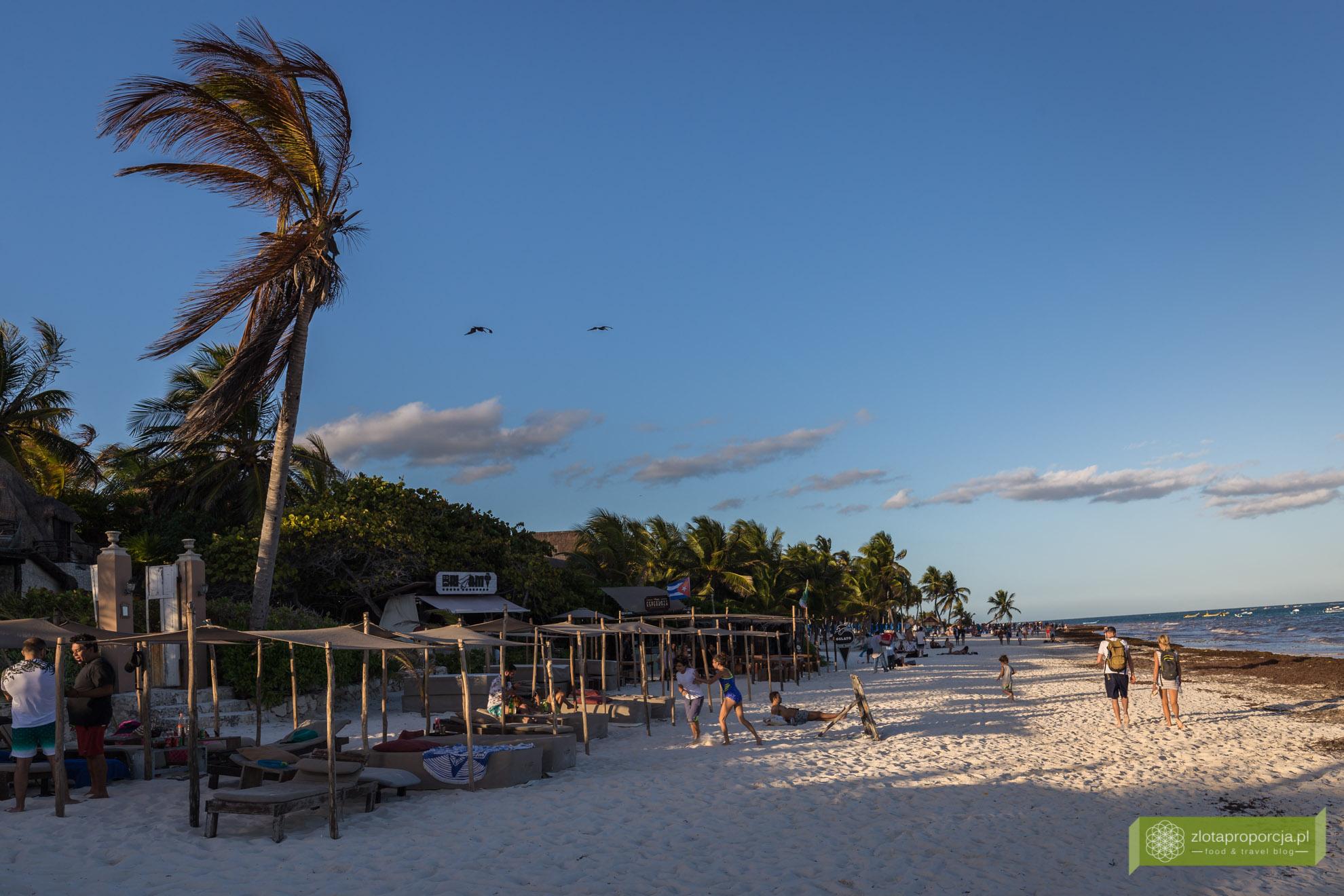 Tulum, plaża w Tulum, wodorosty, Jukatan, Meksyk,