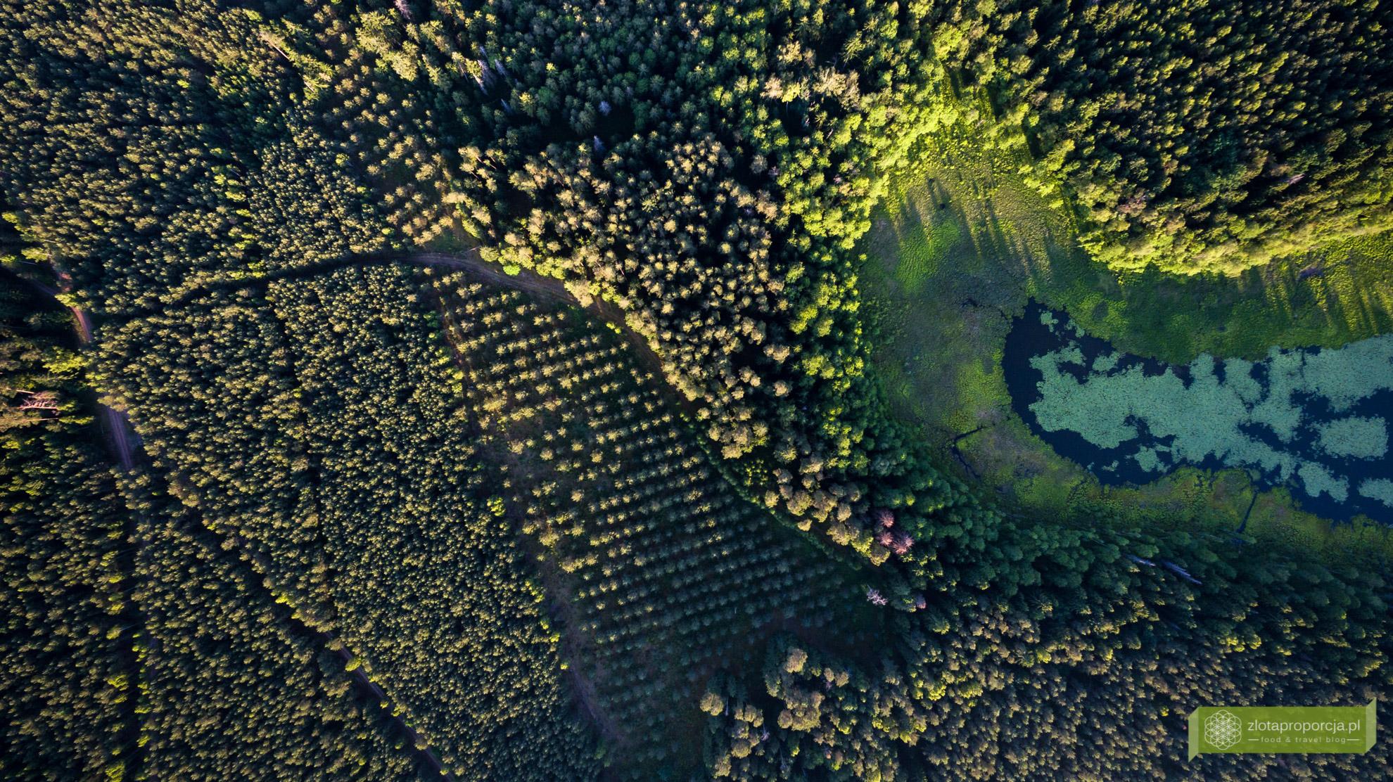 Jezioro Krejwelanek, Suwalszczyzna, atrakcje Suwalszczyny, Suwalszczyzna z drona, Podlasie