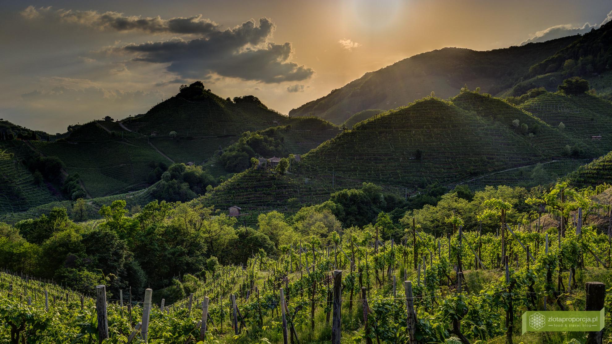 Conegliano Valdobbiadene, prosecco, cartozze, kraina prosecco, szlak wina prosecco, okolice Treviso, atrakcje Treviso, Wenecja Euganejska, atrakcje Wenecji Euganejskiej