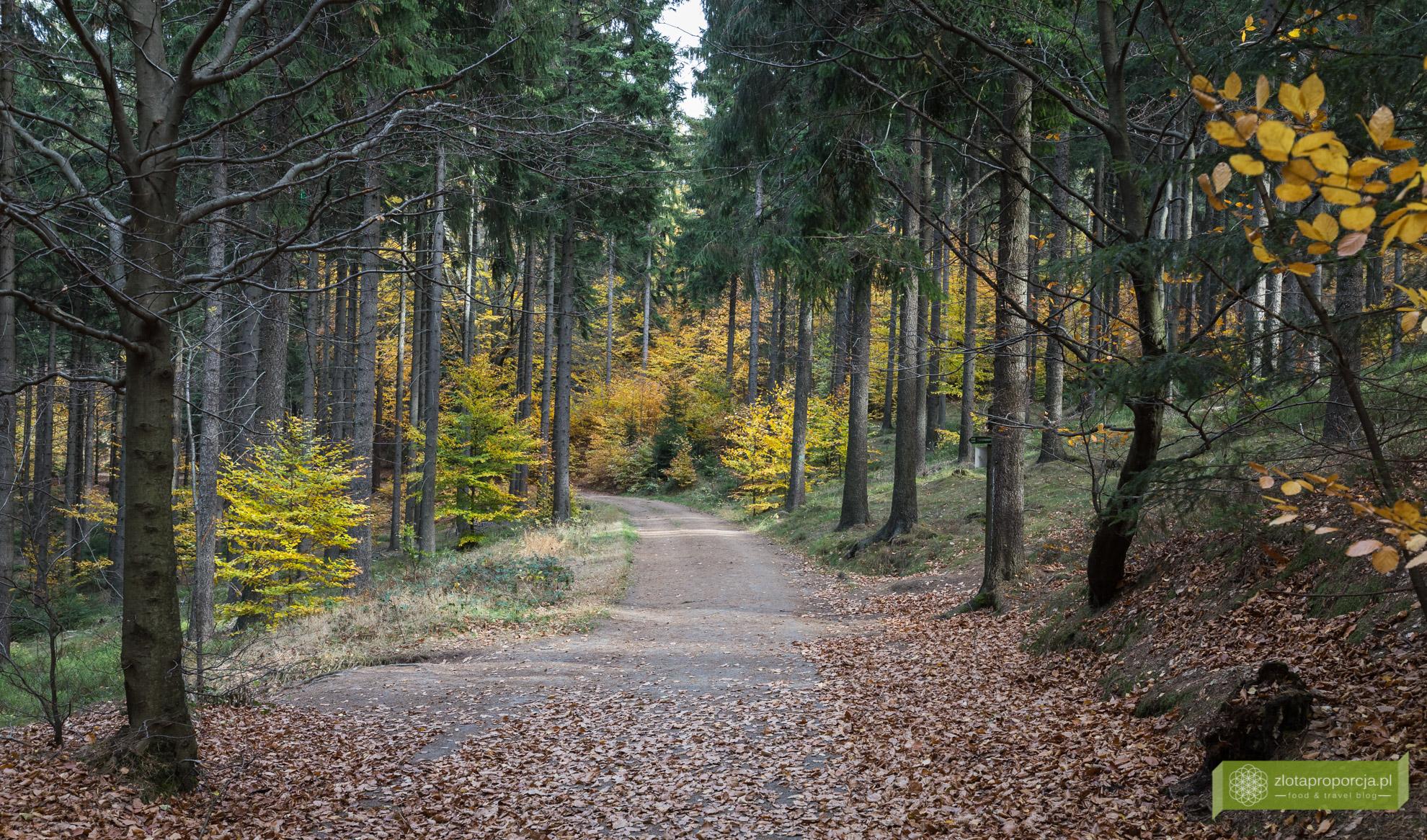 Oybin, Góry Żytawskie, Saksonia, atrakcje Saksonii, skały Kelchstein