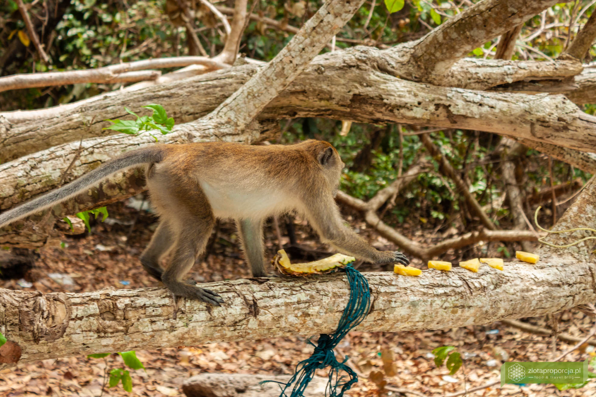 Ko Dong, Tajlandia, Park Tarutao, tajskie wyspy, wyspy wokół Ko Lipe, tajskie Malediwy, Plaża Małp