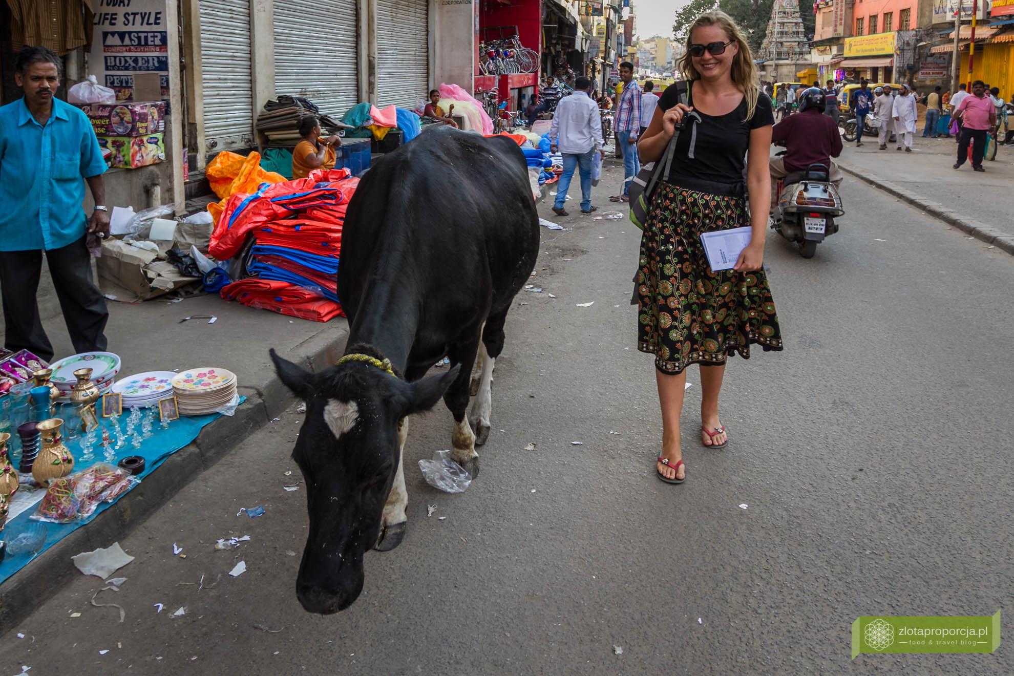 Indie, życie w Indiach,; Mumbaj; krowa Indie, indyjska ulica;