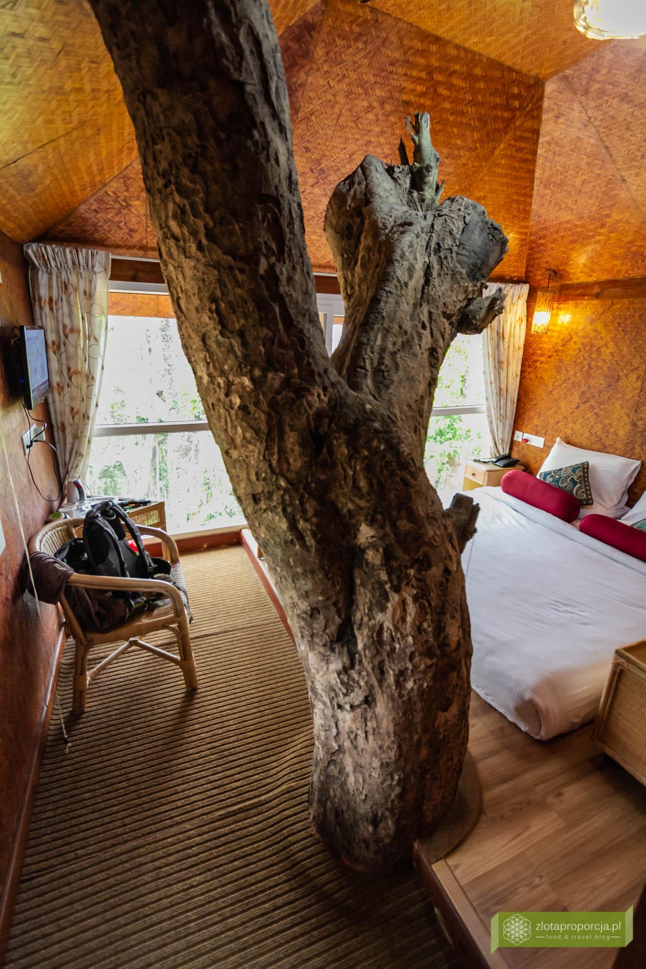 Munnar, Indie, Kerala,; plantacja przypraw, przyprawy w Kerali; ciekawe miejsca Kerala, atrakcje Kerala; , domek na drzewie