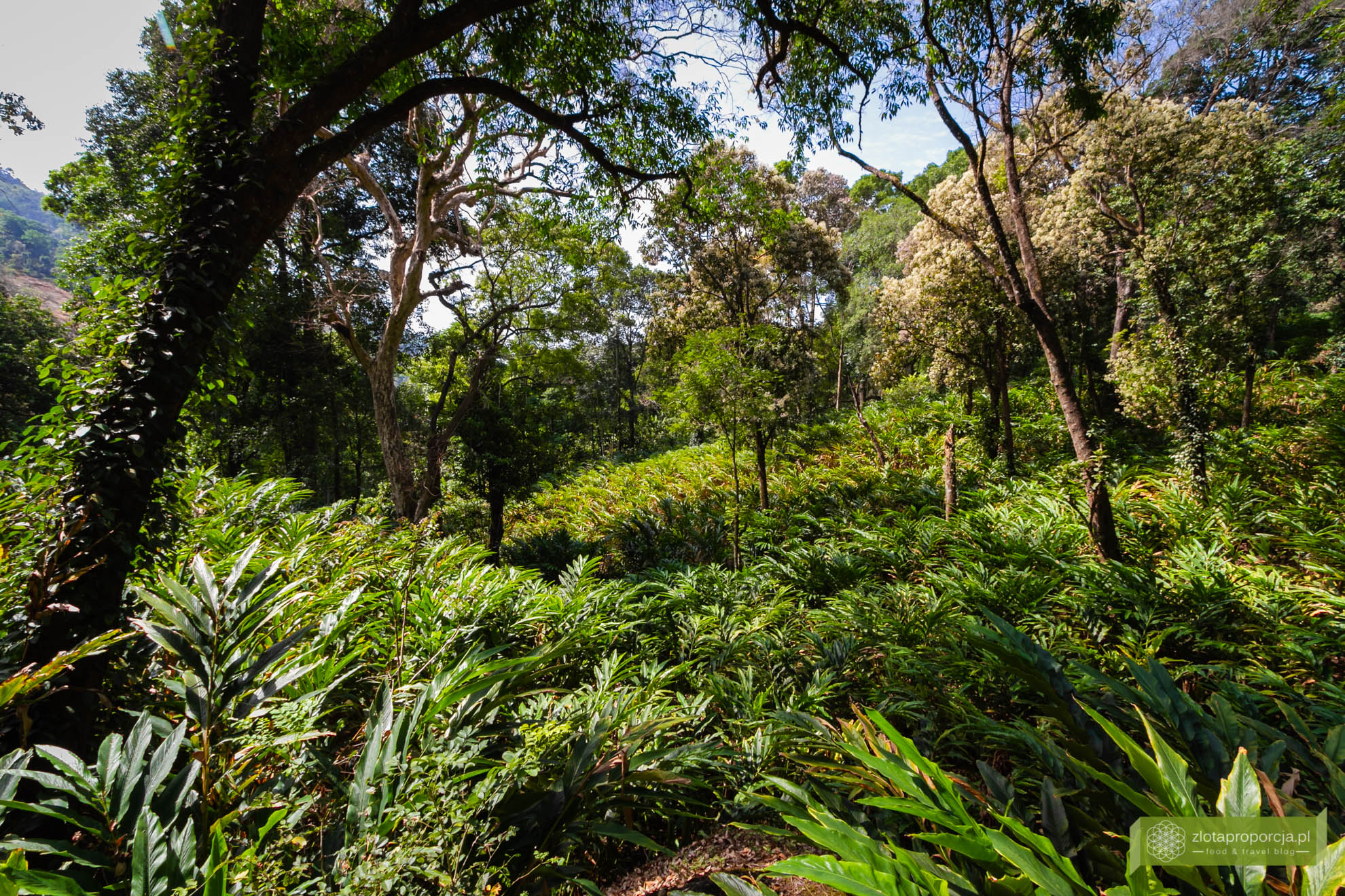 Munnar, Indie, Kerala,; plantacja przypraw, przyprawy w Kerali; ciekawe miejsca Kerala, atrakcje Kerala;