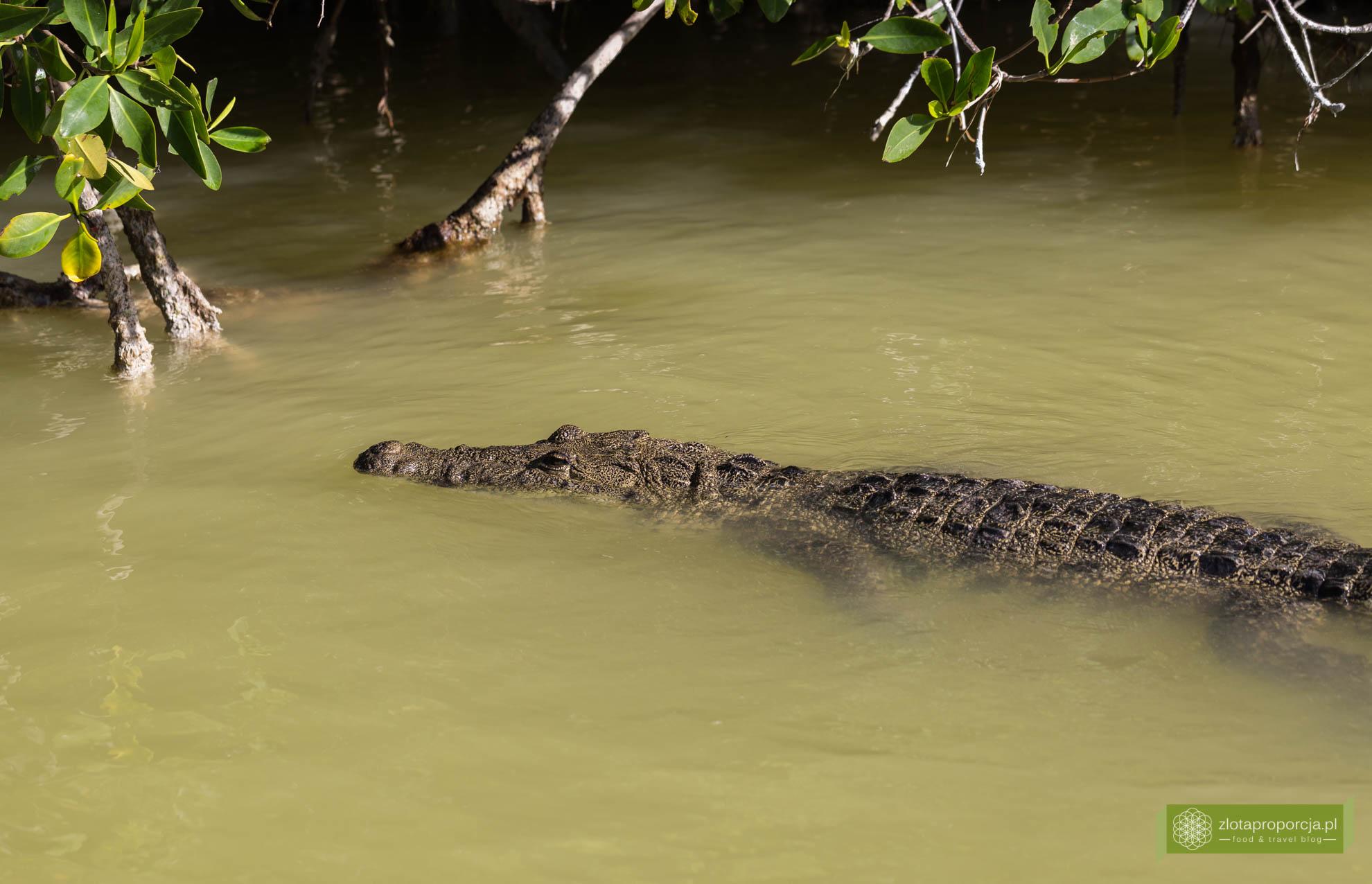 Rio Lagartos, Jukatan, atrakcje Jukatanu, co zobaczyć na Jukatanie; krokodyl