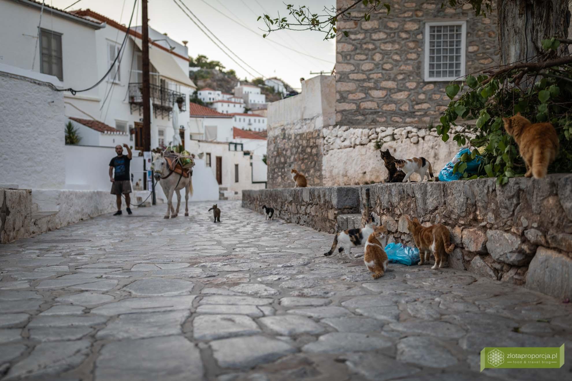 Hydra; wyspa Hydra; Wyspy Sarońskie; Grecja; greckie wyspy; okolice Aten; najpiękniejsze greckie wyspy; hydra osły
