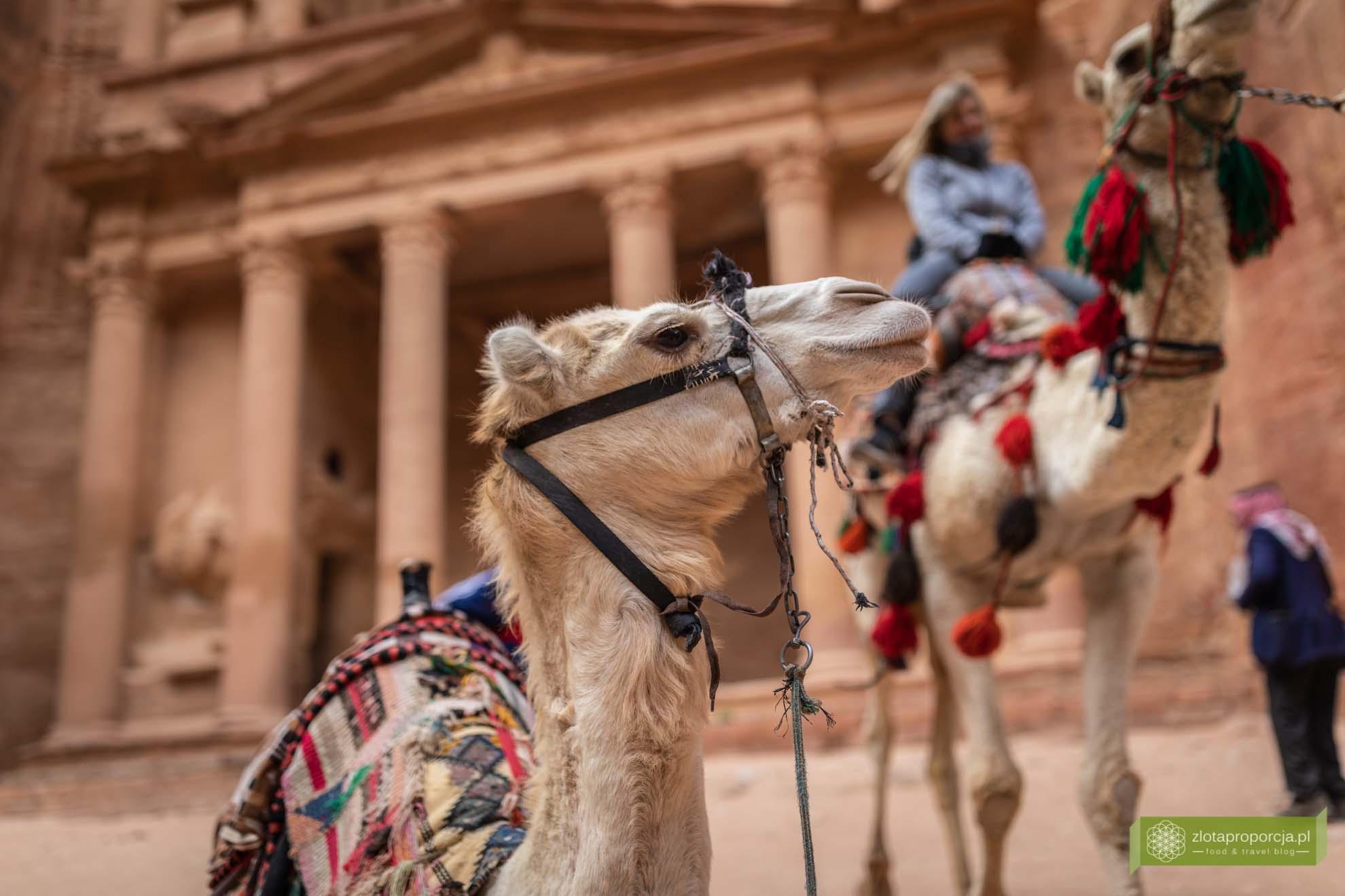 Petra; Jordania; Skarbiec Petra; atrakcje Petry; miasto wykute w skale; Petra Jordania; Petra cud świata; miasto Nabatejczyków; Skarbiec Faraona; Al-Chazna;