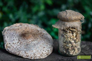 jak przyrządzić kanie; kanie; grzyby; kanie przepis; suszone kanie