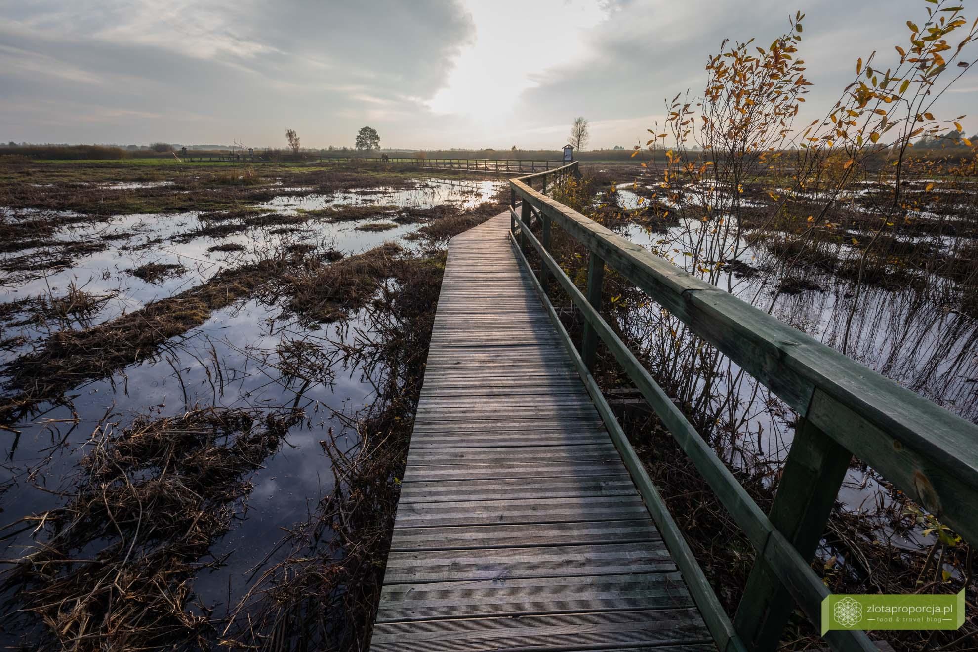 Bagno Całowanie; bagno Mazowsze; okolice Warszawy; Mazowsze; atrakcje Mazowsze; okolice Otwocka; torfowisko Mazowsze; Bagno Całowanie ścieżka; Bagno Całowanie wycieczka; Bagno Całowanie trasa;