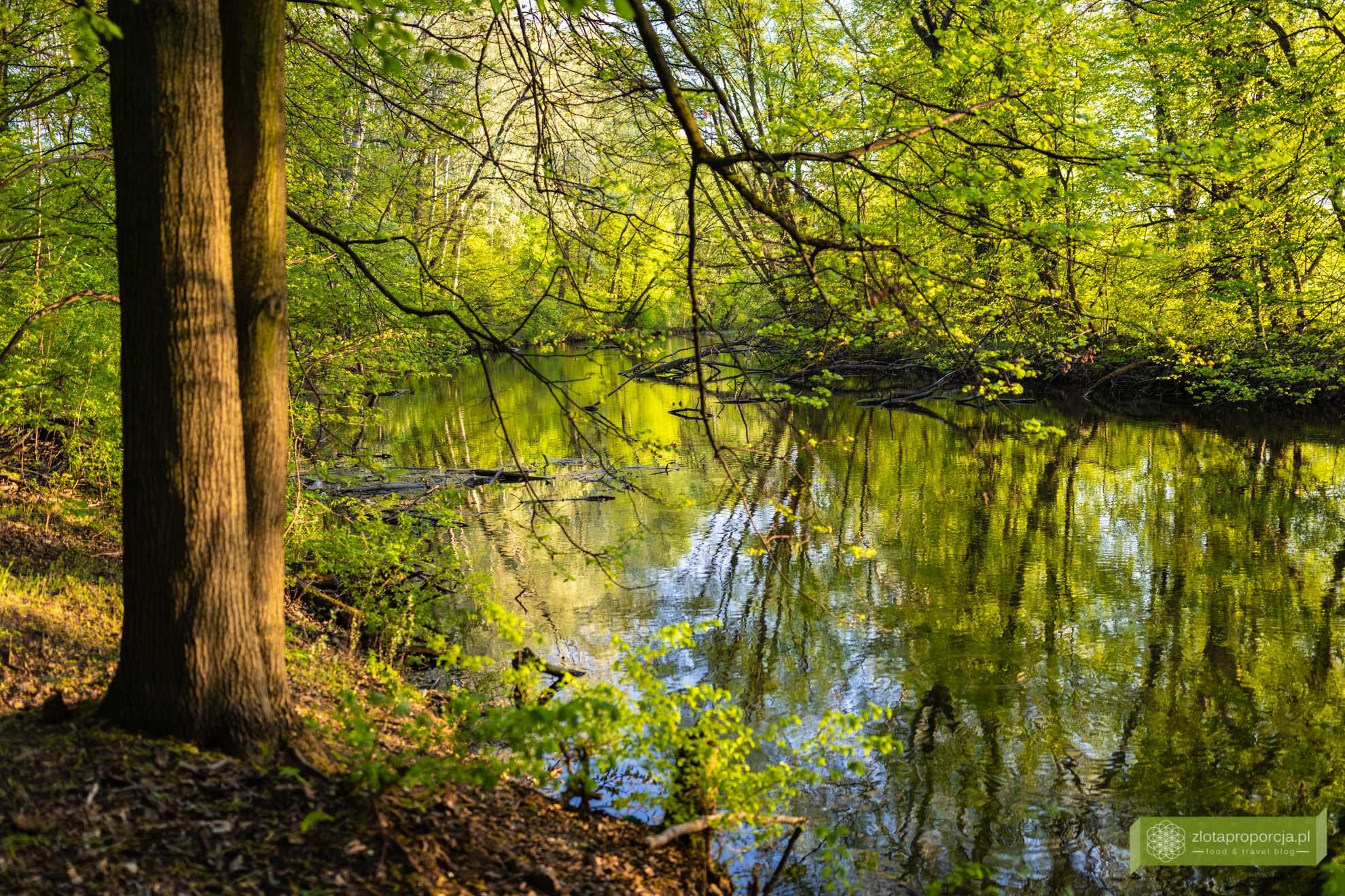 Morysin; Rezerwat Przyrody Morysin; Wilanów; atrakcje Wilanowa; Warszawa;
