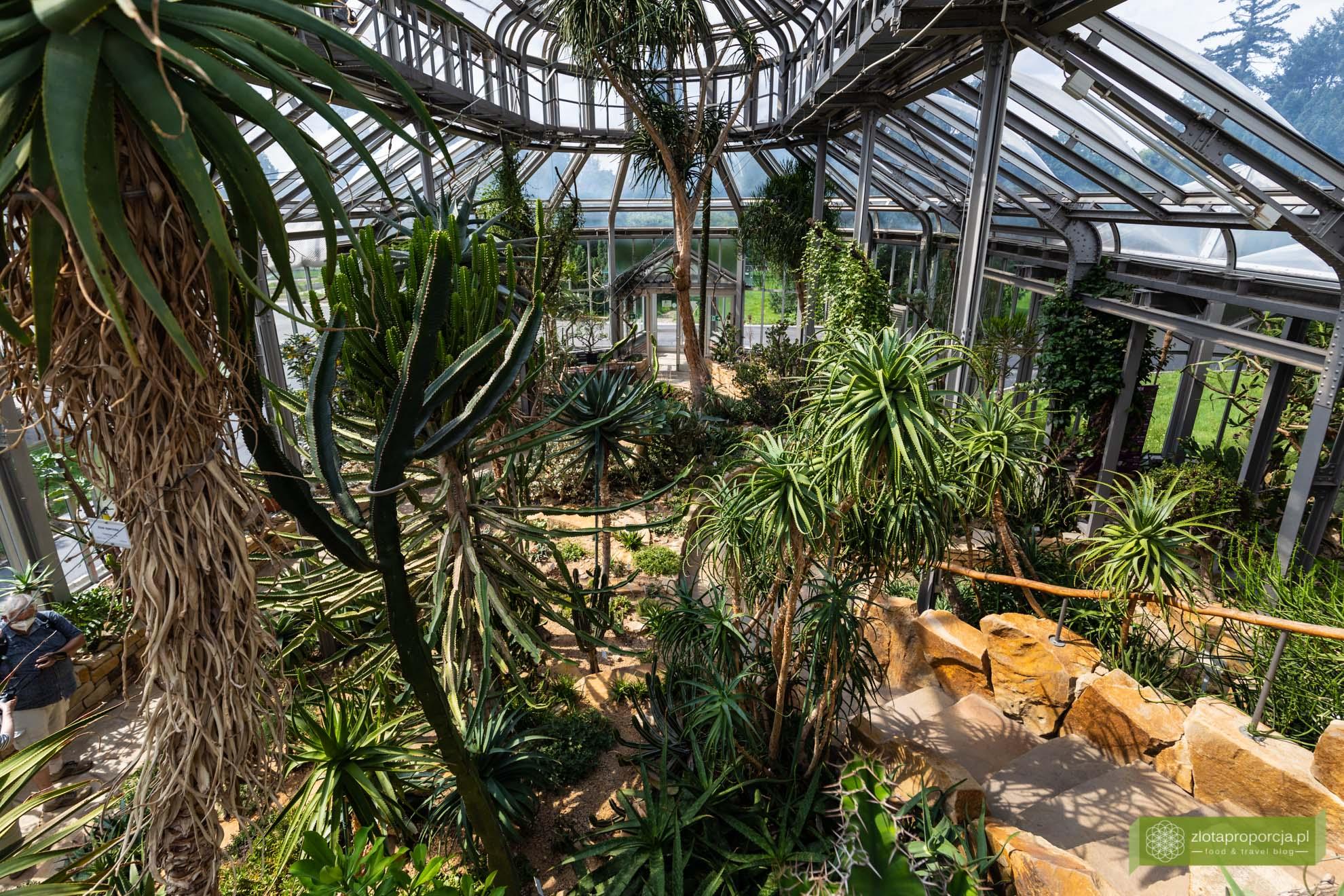 Berlin; Steglitz-Zehlendorf; atrakcje Berlina; Berliński Ogród Botaniczny; ogród botaniczny w Berlinie;